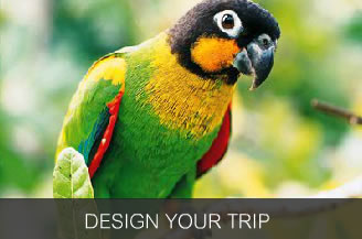Design Your Trip to Iquitos