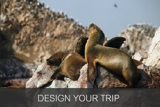 Design Your Trip to Paracas